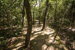 Brick Way into a Forest in Brasilia, Brazil. Parque Olhos d'agua royalty free stock photos