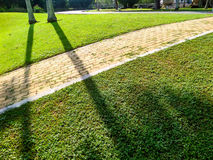 Brick way sidewalk and shadow of tree Stock Photography