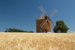 Brick windmill in a field of corn. Royalty Free Stock Photography