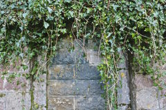 Bricked over doorway, with ivy. Bricked over doorway arch (brick wall), with ivy Royalty Free Stock Photography