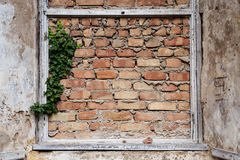 Bricked up window frames and some ivy in an old building, backgr Stock Photo
