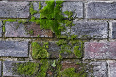 Bricks Covered in Luscious Green Moss Stock Image