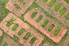 Bricks Embedded in Ground. Blocks of bricks embedded in ground, framed with algae and weeds stock photography