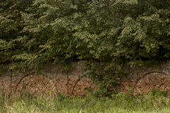 Bricks fence. Old fence from red bricks in forest Stock Images
