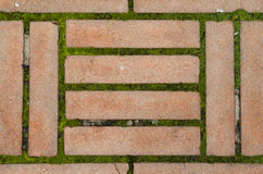 Bricks and green. Symmetric red brick floor with moss Royalty Free Stock Image