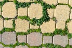 Bricks and green Stock Image