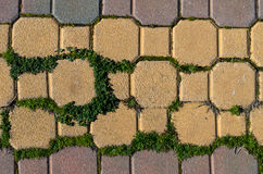 Bricks and green Stock Photos