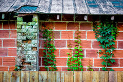 Bricks and Ivy on a building side Royalty Free Stock Photos