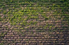 Bricks and moss Royalty Free Stock Image