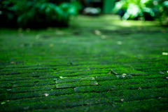 The bricks path covered with green moss and leaf Stock Photo
