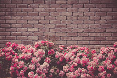 The bricks and pink roses Royalty Free Stock Image