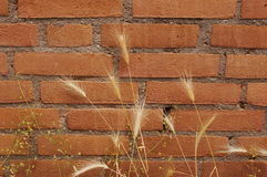 Bricks with a plant. Some nature in the city with a wall Royalty Free Stock Images