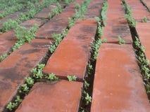 Bricks and plants Stock Photo
