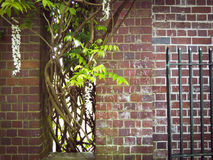 Bricks and plants. Just some corner of Winter Garden Auckland Stock Photo