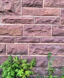 The Bricks and Plants stock photography