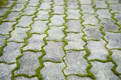The bricks on the sidewalk were covered with moss. Very aesthetic royalty free stock photo