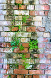 Bricks wall damage background layers facade plants Royalty Free Stock Photography
