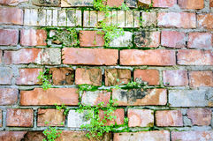 Bricks wall damage background layers facade plants Stock Photo