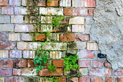 Bricks wall damage background layers facade plants Royalty Free Stock Photo