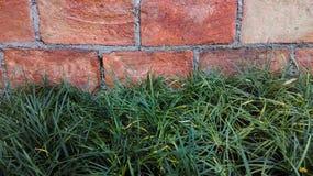 Bricks wall and green plants Royalty Free Stock Photography