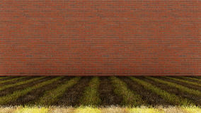 Bricks Wall with Mixed Grass Floor Royalty Free Stock Image