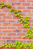 Brickstone wall Stock Image