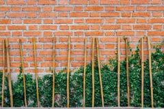Brickwall и зеленый плющ стоковая фотография