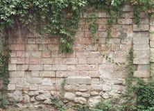 Brickwall. Zdjęcia Royalty Free
