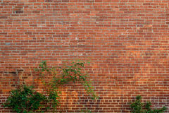 brickwall achtergrond Stock Afbeeldingen