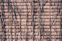 Brickwall dell'edera Immagine Stock
