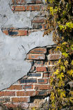 Brickwall dell'edera di lerciume Fotografia Stock