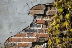 Brickwall dell'edera di lerciume Fotografie Stock Libere da Diritti