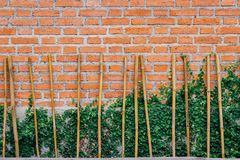 Brickwall et lierre vert photographie stock