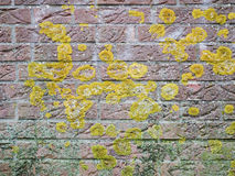 Brickwall with lichen Royalty Free Stock Photos