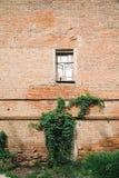 Brickwall met oude venster en het groeien installatie Royalty-vrije Stock Afbeelding