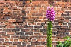 Brickwall no parque Imagem de Stock