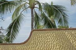Brickwall texturisé avec le palmier photos stock