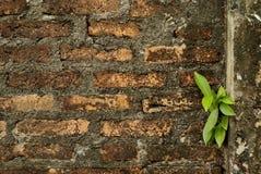 Brickwallen & trädet 1 Arkivbild