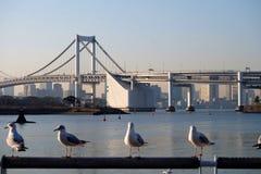bridżowa Japan odaiba tęcza Tokyo Fotografia Stock
