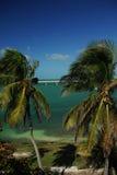 bridżowe palmy zdjęcia royalty free