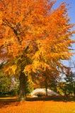 bridżowy anglików ziemi biel woerlitz Zdjęcie Royalty Free