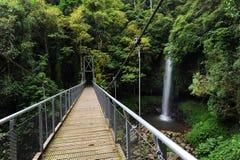 bridżowy tropikalny las deszczowy zdjęcia stock