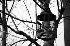 Brid in the cage Royalty Free Stock Images