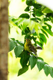 Brid. Closeup yellow bird on a branch Stock Images