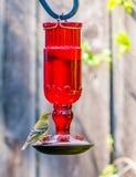 Brid on feeder. Yellow black bird on hummingbird feeder Stock Image