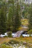 bridżowi lasu znad rzeki Obraz Stock