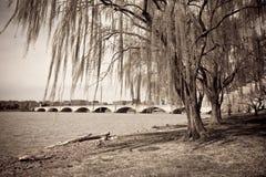 bridżowy dc fotografii rocznik Washington Fotografia Royalty Free