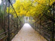 bridżowy las Fotografia Royalty Free