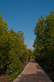 bridżowy las idzie mangrowe Zdjęcie Royalty Free