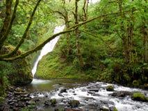 Bridal вуаль понижается водопад Орегона каскада Стоковое фото RF